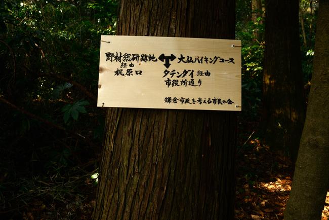 DSC_7764-2.jpg
